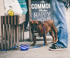 Leashes & Longing - Tied Up Dogs in New York City