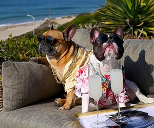 "Meet the Hilarious ""Drunk Dogs"" of Instagram"