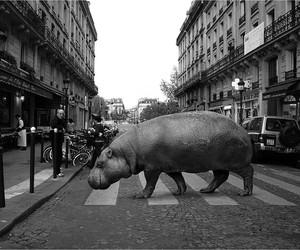 Wild Animals Strut Through Street Pictures