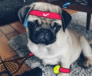 Designerns Love To Doodle On Their Pug