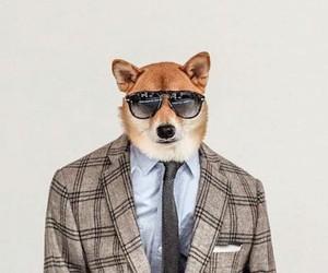 Dapper Dog Dressed in Most Stylish Menswear