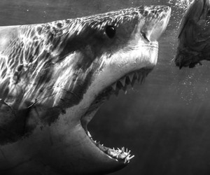 Shark Photography by Todd Bretl.