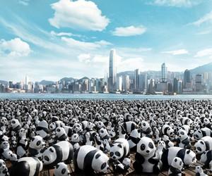 1600 Pandas World Tour Coming to Hong Kong