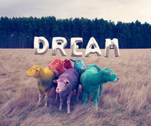 Gray Malin's Colored Sheep for the Dream Series