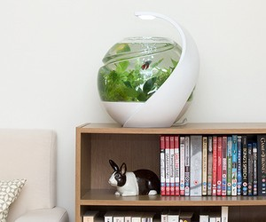 Avo. Self-cleaning Fish Tank