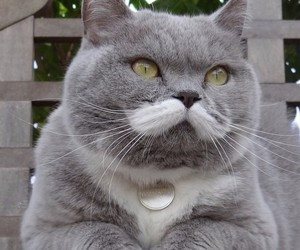 The cat with a mustache