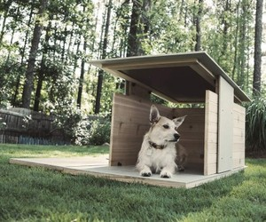 Puphaus By Pyramid Is The Ultimate Dog Home