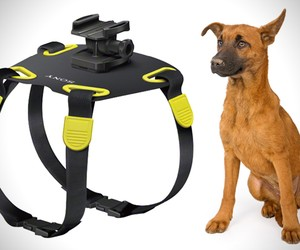 Sony Dog Harness Cam