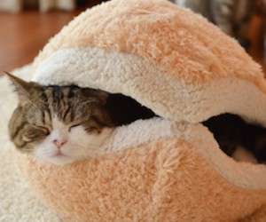 Cute Little Japanese Cat Bed Looks Like A Pastry