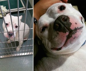 """""""Before and After Adoption"""" – Heartwarming Photos"""