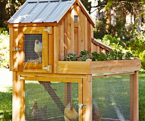 Two Storey Chicken Coop Design