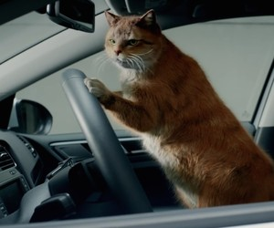 Human Cat Compilation