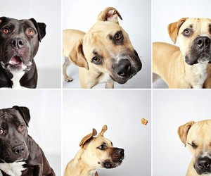 Creative Photobooth-Style Portraits of Dogs