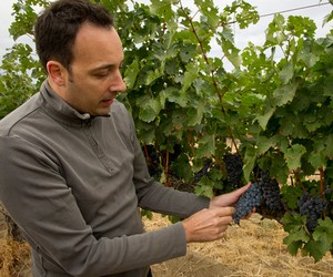 Interview with Head Winemaker of Columbia Crest