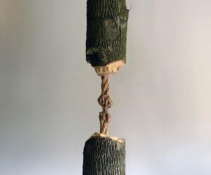 Schrodinder's Wood