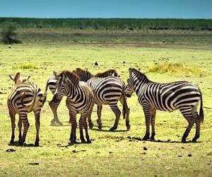Serengeti beautiful documentation