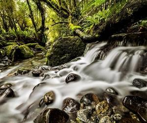 Oneness New Zealand