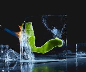 Robertas Daskevičiaus freezes food in ice cubes