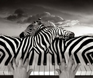 Photography of Illusions by Thomas Barbèy