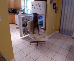 Dog Breaks Into Fridge for FreshPet Snack
