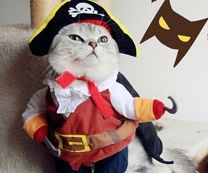 Cool Caribbean Pirate Cat Costume