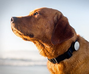 Whistle | Dog Activity Monitor